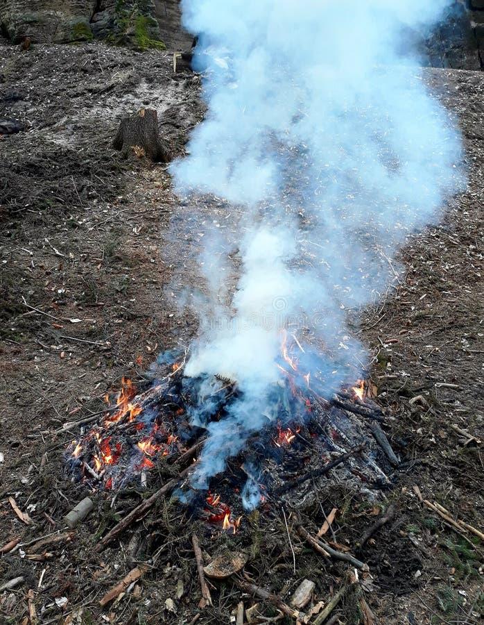 营火在森林里 免版税库存图片