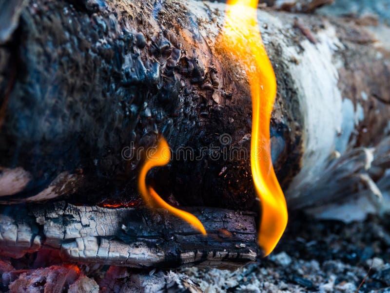 营火接近,火焰、灰和炭烬 库存照片