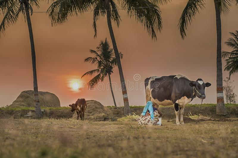 萨利姆街道摄影印度泰米尔人nanu村庄摄影 图库摄影