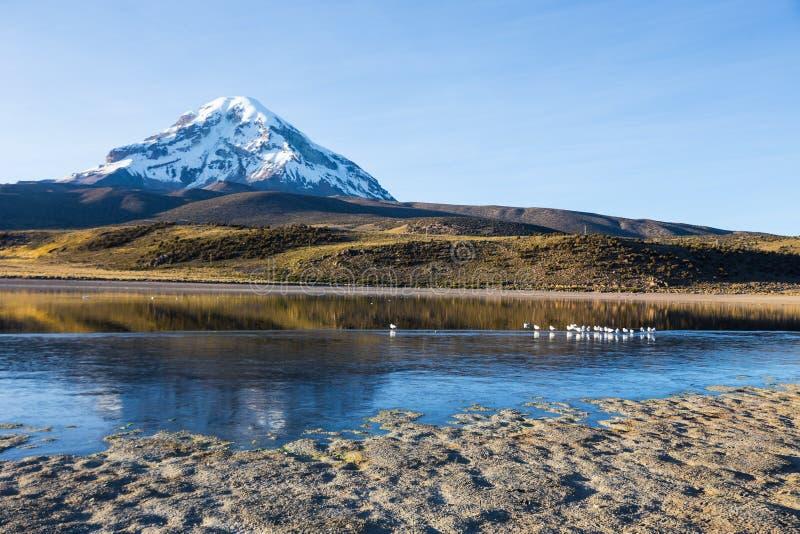 萨哈马火山和湖Huayñacota 安地斯山的玻利维亚 图库摄影