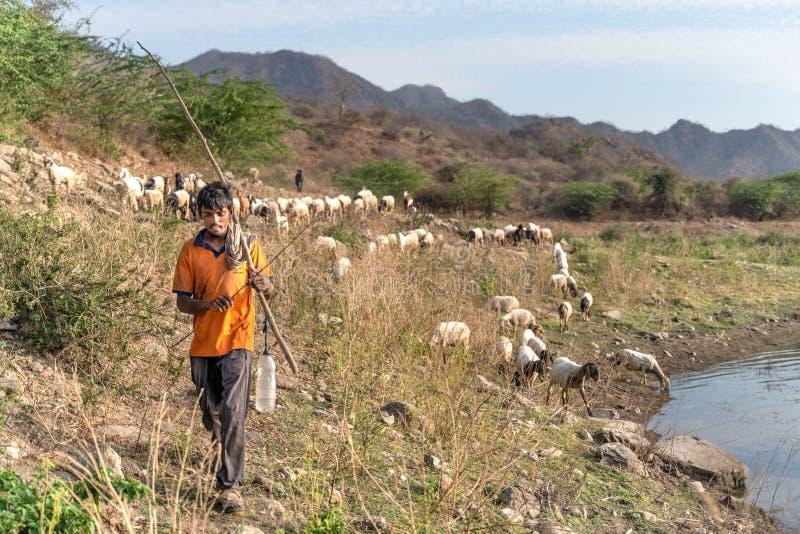 萨德里/印度13 07 2019年:印度牧羊人和他的动物 免版税库存照片