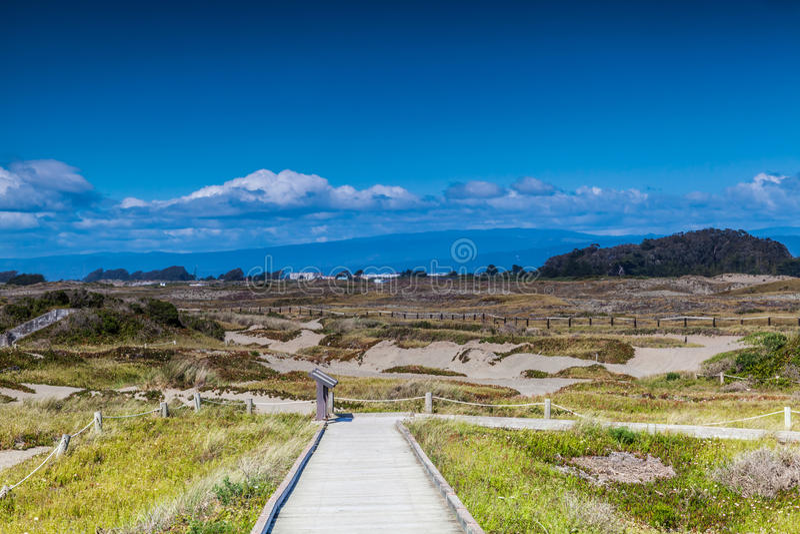 萨摩亚沙丘在尤里卡加利福尼亚 免版税库存图片