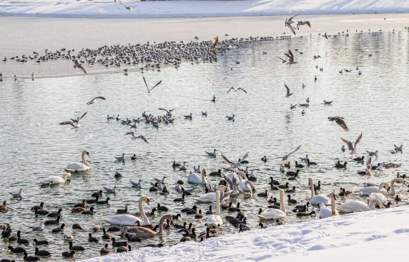 萨格勒布, Jarun湖 库存图片