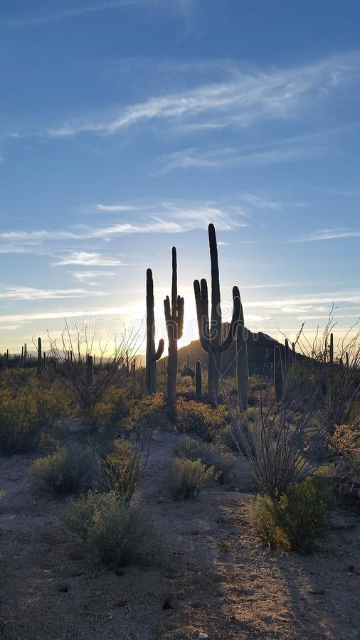 萨格鲁国家公园图森亚利桑那日落 免版税库存图片