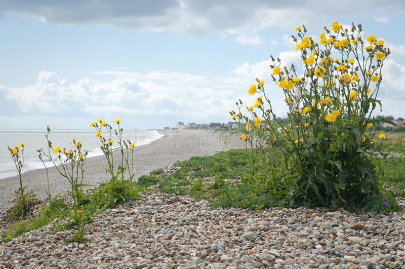 萨福克石渣海滩 库存照片