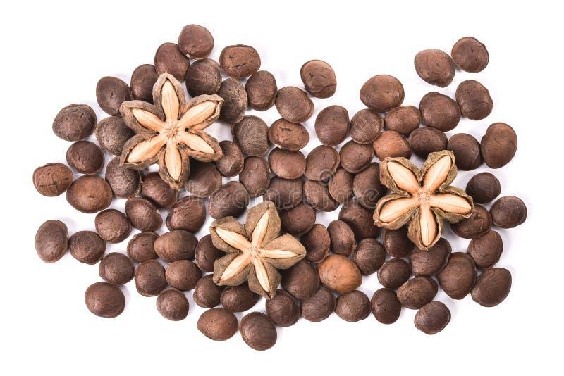 萨莎inchi、sacha玛尼或星印加人在白色背景的花生种子 免版税库存照片