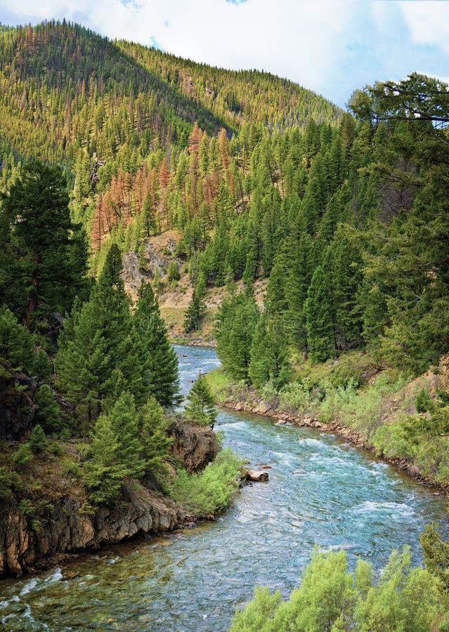 萨蒙河,爱达荷 免版税图库摄影
