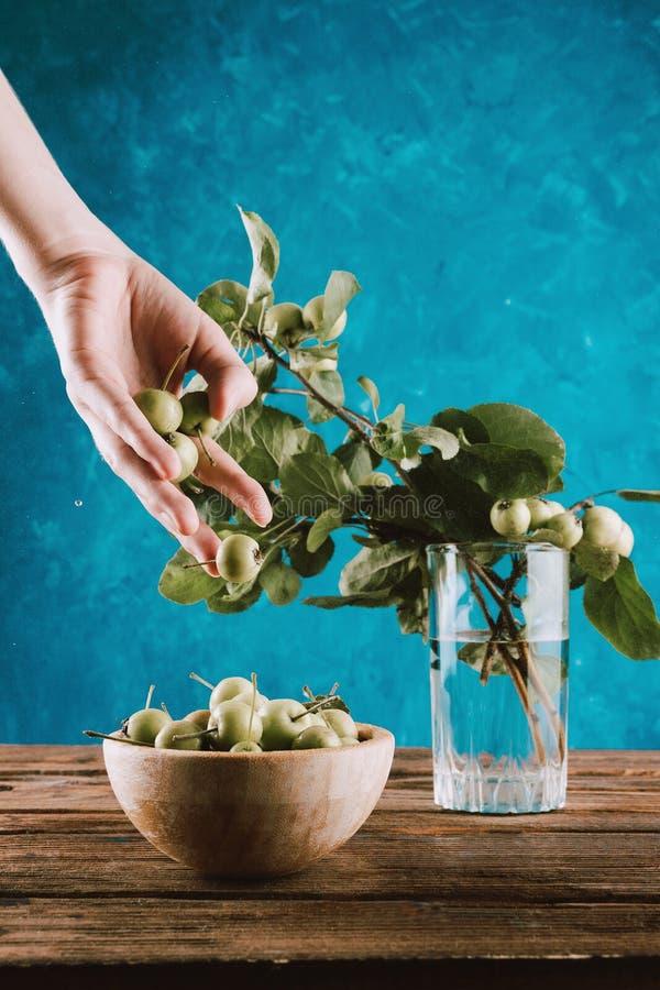 落入从妇女` s手的木碗的小新鲜的有机苹果有树枝的 免版税库存照片