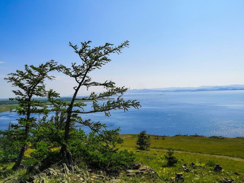 落叶松属在湖的背景中 在湖的风景 在贝加尔湖岸的风景  图库摄影