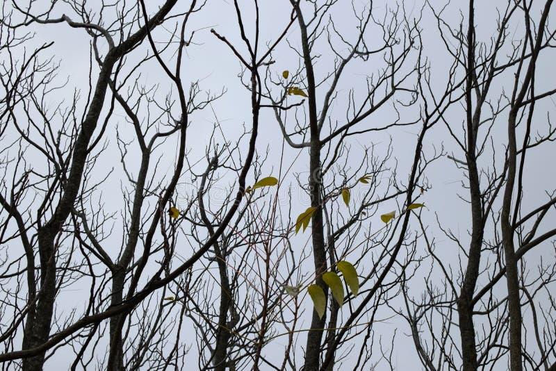 落叶树和黄色叶子图片