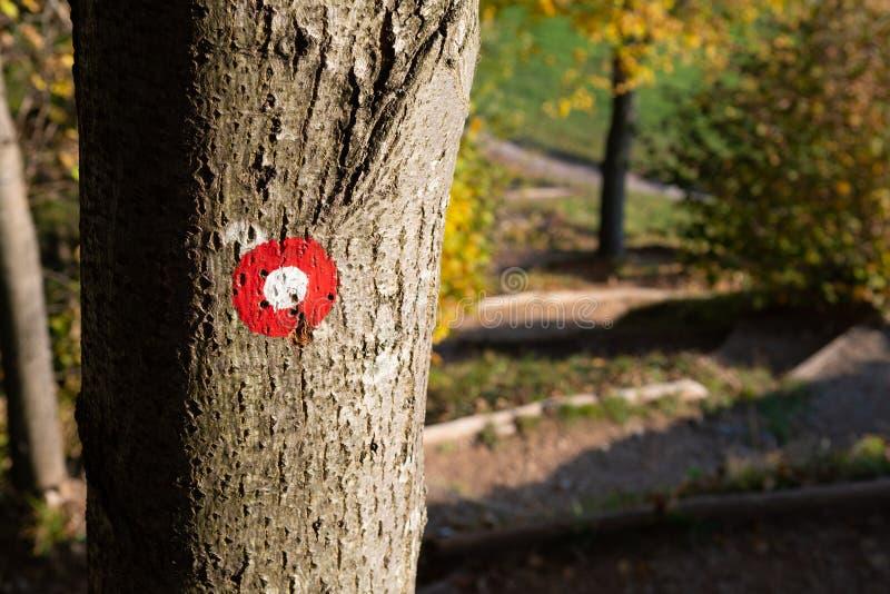 落后在树干的标号与道路可看见在背景中 库存照片