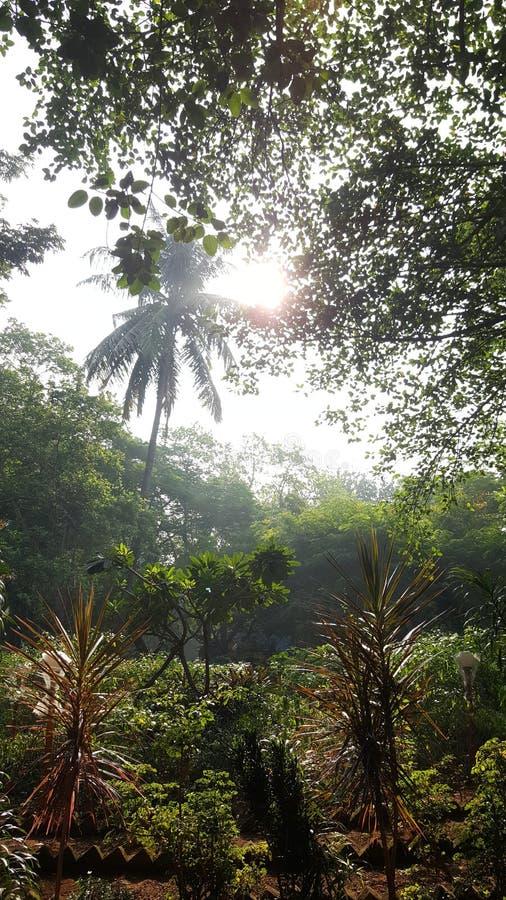 落在植物的早晨太阳光束 免版税库存照片