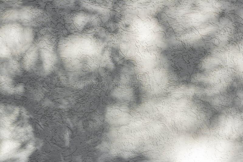 落在背景设计的白色混凝土墙上的自然叶子的阴影 免版税库存照片