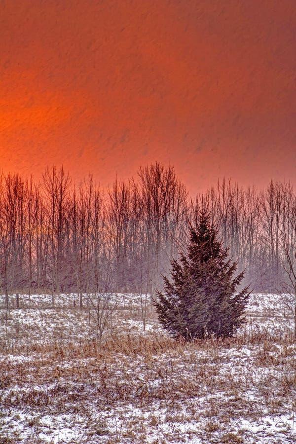 落在草甸的雪在日出 库存图片
