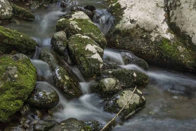 落在青苔的柔滑的水盖了岩石 免版税库存照片