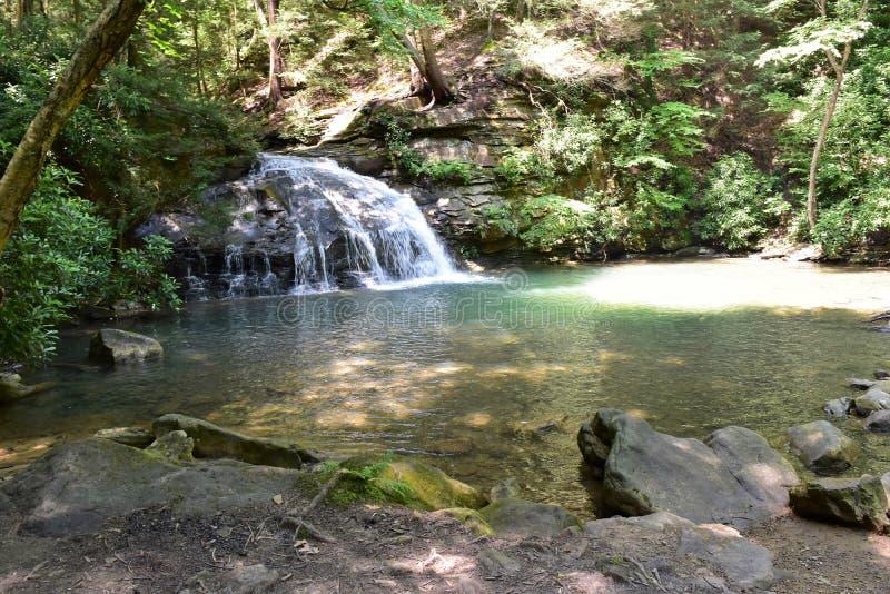 落山新的公园状态taughannock瀑布森林约克 免版税图库摄影