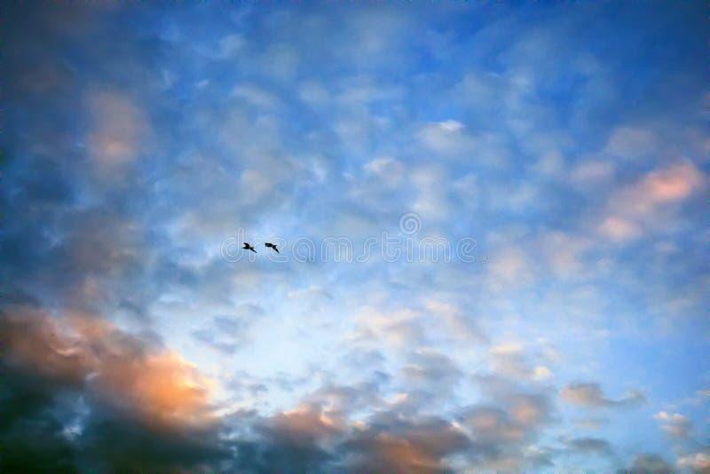 落日和飞鸟照亮的柔和的云彩 免版税图库摄影