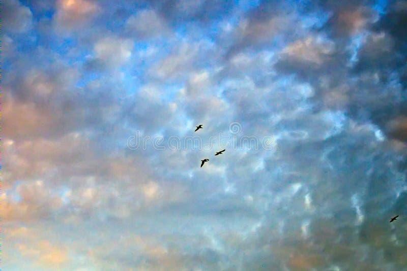 落日和飞鸟照亮的柔和的云彩 图库摄影