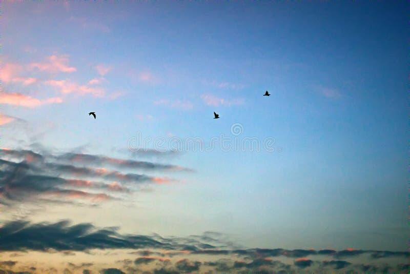 落日和飞鸟照亮的柔和的云彩 库存照片