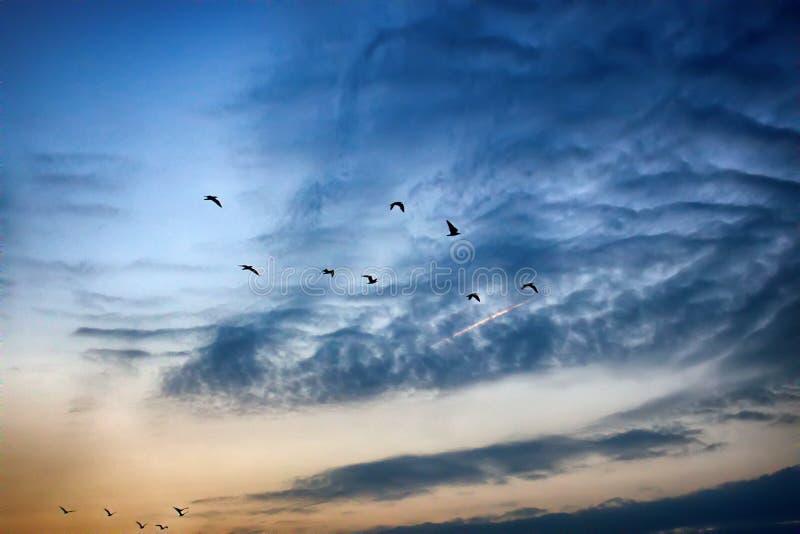 落日和飞鸟照亮的柔和的云彩 库存图片