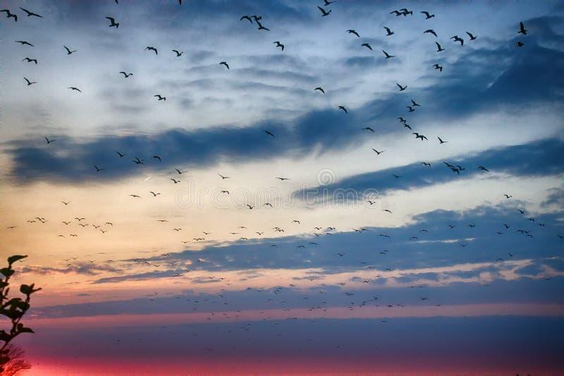 落日和飞鸟照亮的柔和的云彩 免版税库存图片