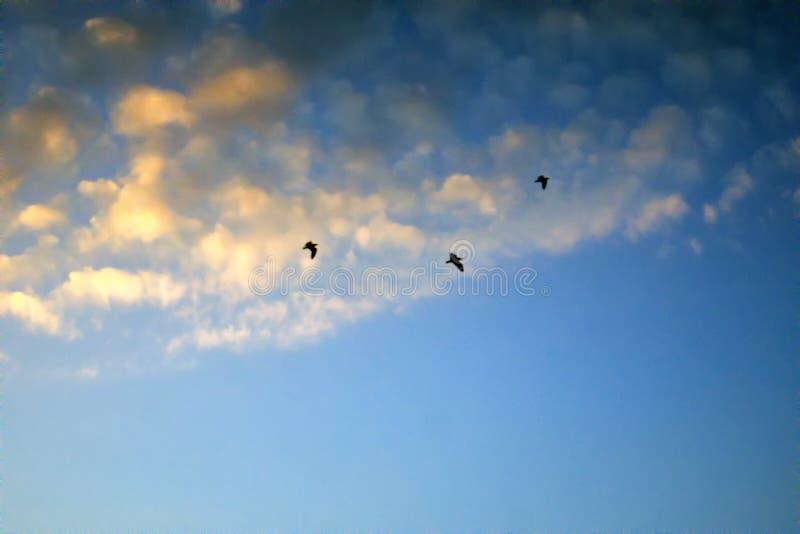 落日和飞鸟照亮的柔和的云彩 免版税库存照片