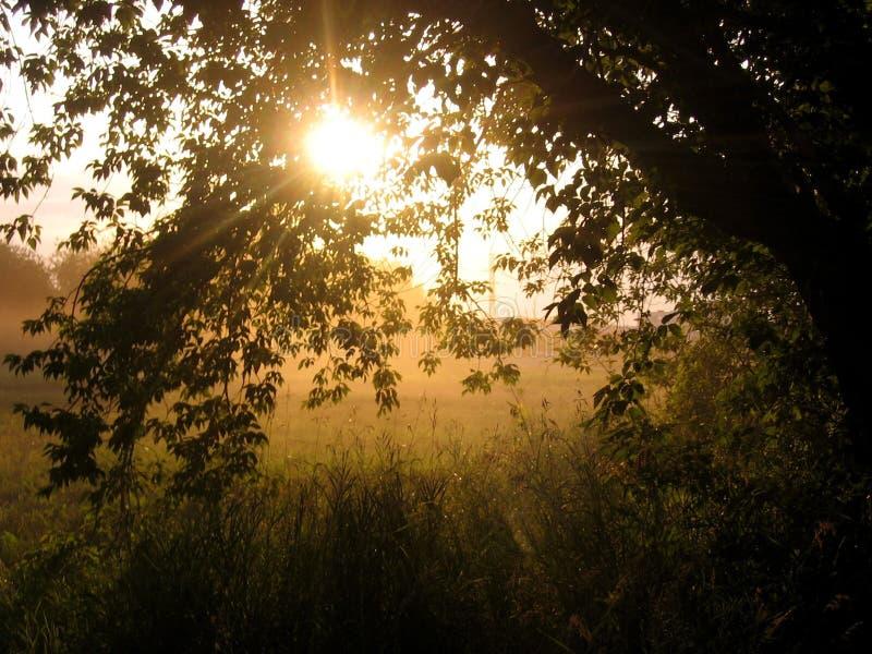 落日通过平衡的雾发光在大树附近 图库摄影