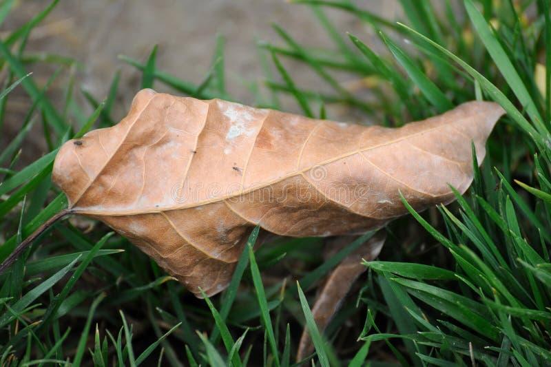 落的叶子 免版税库存图片