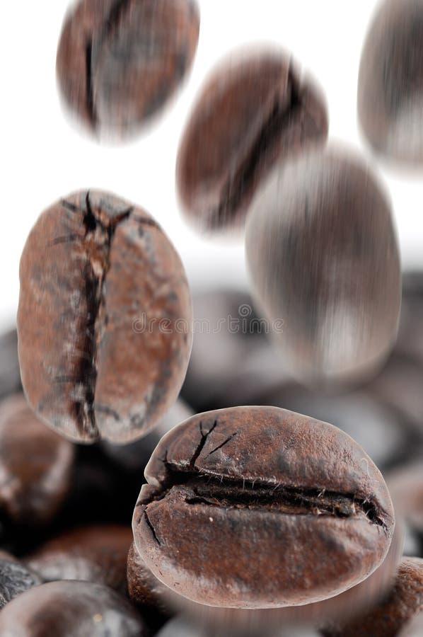 落的咖啡豆 免版税库存照片
