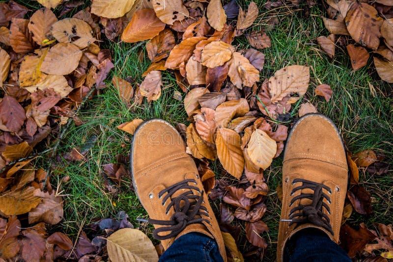 落的春天森林步行脚 免版税库存图片