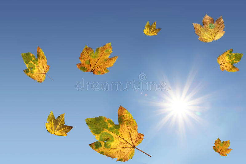 落的槭树叶子和明亮的阳光,蓝天 免版税库存图片