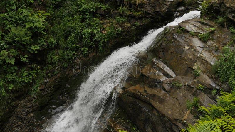 落的水、岩石和绿色植被在森林里 图库摄影