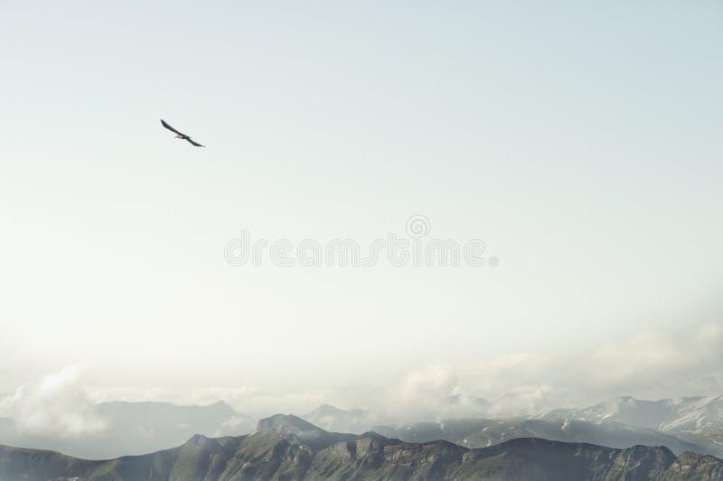 落矶山和飞行老鹰鸟风景 免版税库存照片