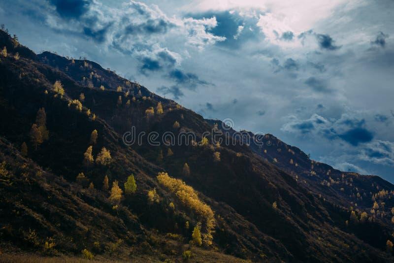 落矶山脉长满与黄色树反对多云秋天天空由落日的光芒照亮 免版税库存图片