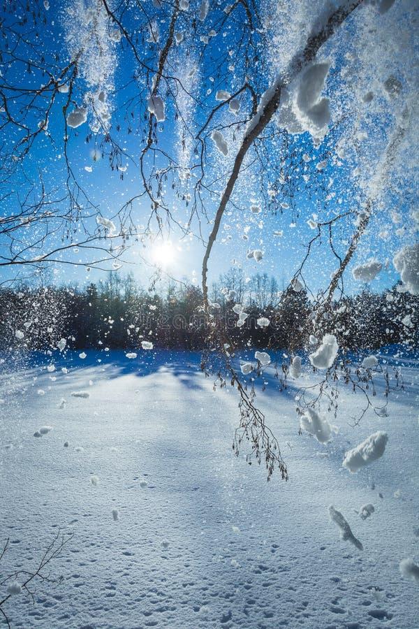 落从上面树的雪 库存照片