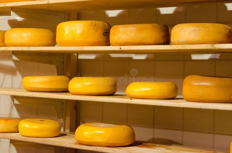 著名农夫乳酪说谎在木架子的,阿姆斯特丹,荷兰 免版税库存照片