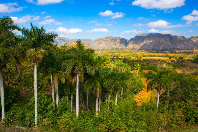 著名古巴农田烟草区域, Valley de Vinales,古巴 图库摄影