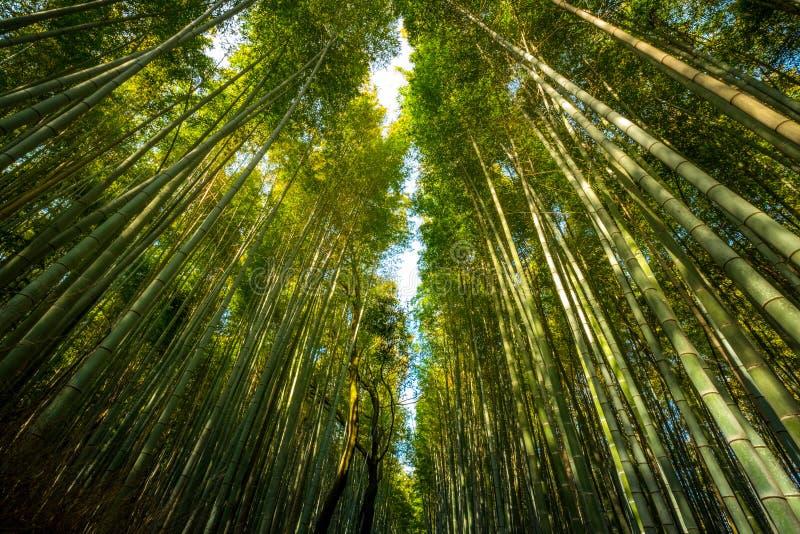 著名竹树丛Arashiyama区位于在京都,日本 免版税库存图片