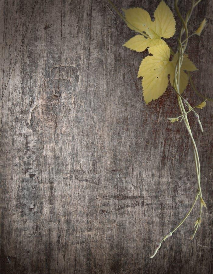 葡萄分支在木板的 库存图片