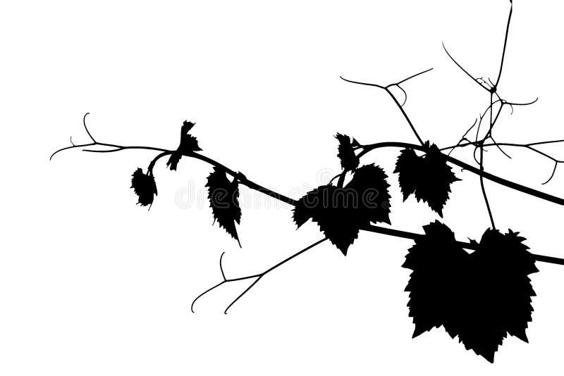葡萄剪影 向量例证