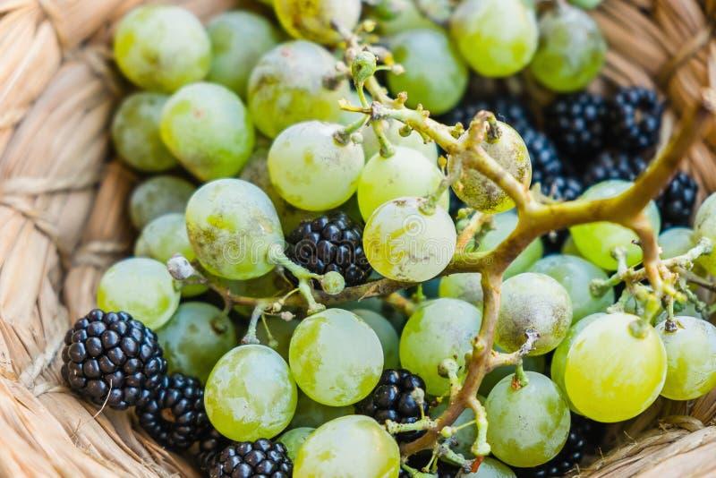 葡萄和黑莓 库存照片