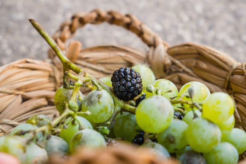 葡萄和黑莓 免版税库存照片