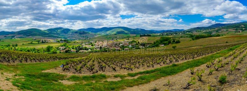 葡萄园和乡下全景在博若莱红葡萄酒,村庄Lantignie 免版税库存照片