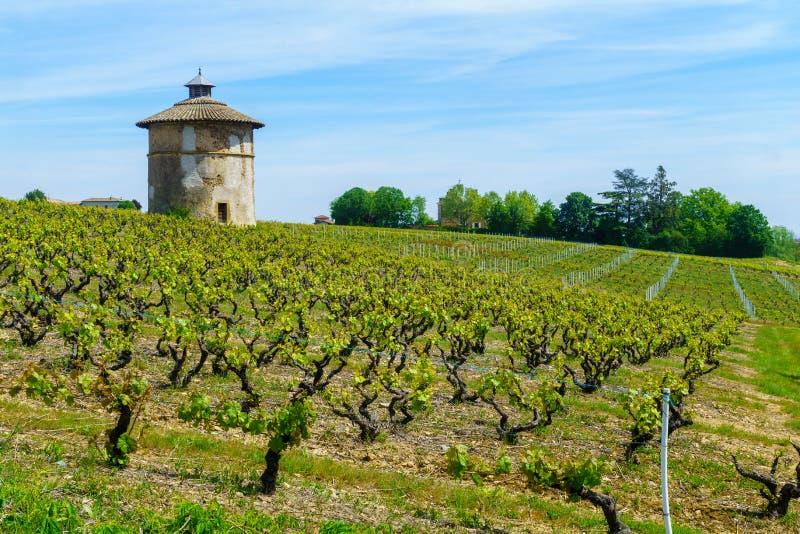 葡萄园和乡下和老在博若莱红葡萄酒保留塔, 库存图片