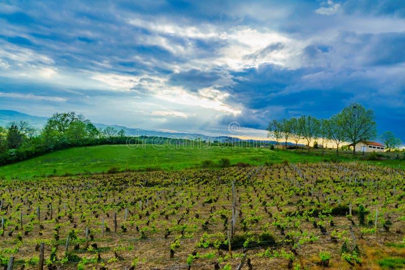 葡萄园和乡下在博若莱红葡萄酒,法国 免版税库存图片