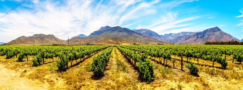 葡萄园和周围的山全景在春天在西开普省的Boland酒地区 免版税库存照片