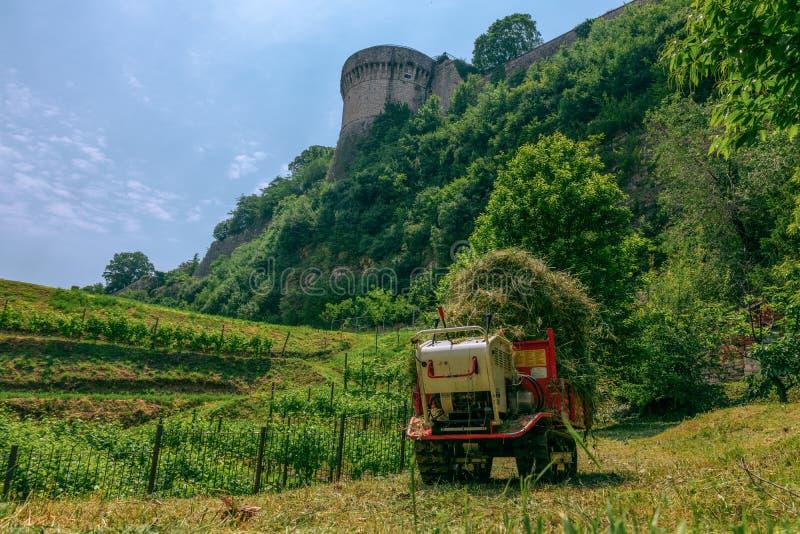葡萄园和城堡墙壁的看法 库存照片