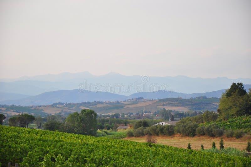 葡萄园和小山佛罗伦萨托斯卡纳 免版税库存照片