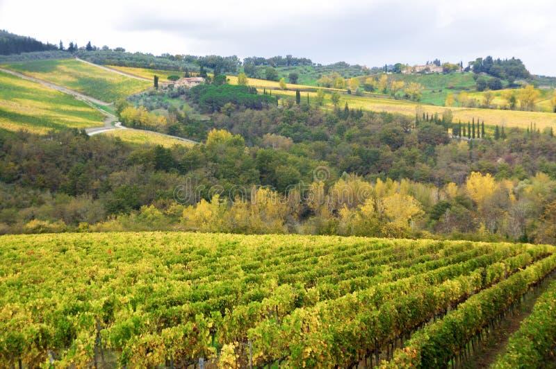 葡萄园和小山在秋天,吉安迪,意大利美好的托斯卡纳风景  免版税库存图片