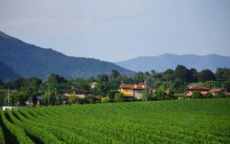 葡萄园和小村庄威尼托风景意大利北部 库存图片